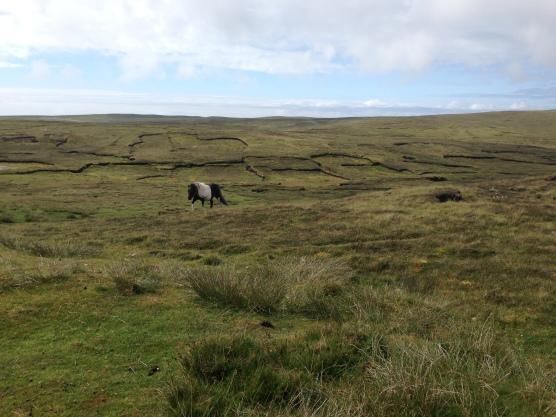 Pony Landscape